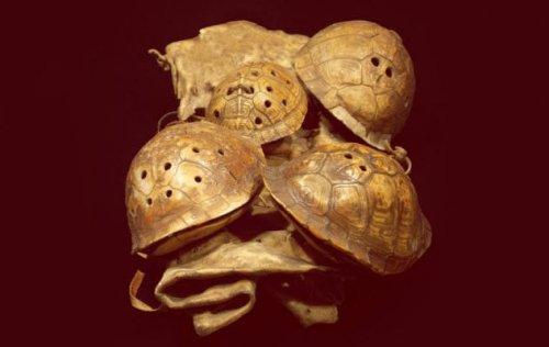ТОП-10: Удивительные ископаемые останки, недавно изученные учеными