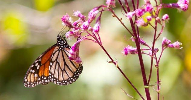 ТОП-10: Невероятно полезные вещи, которые делают бабочки