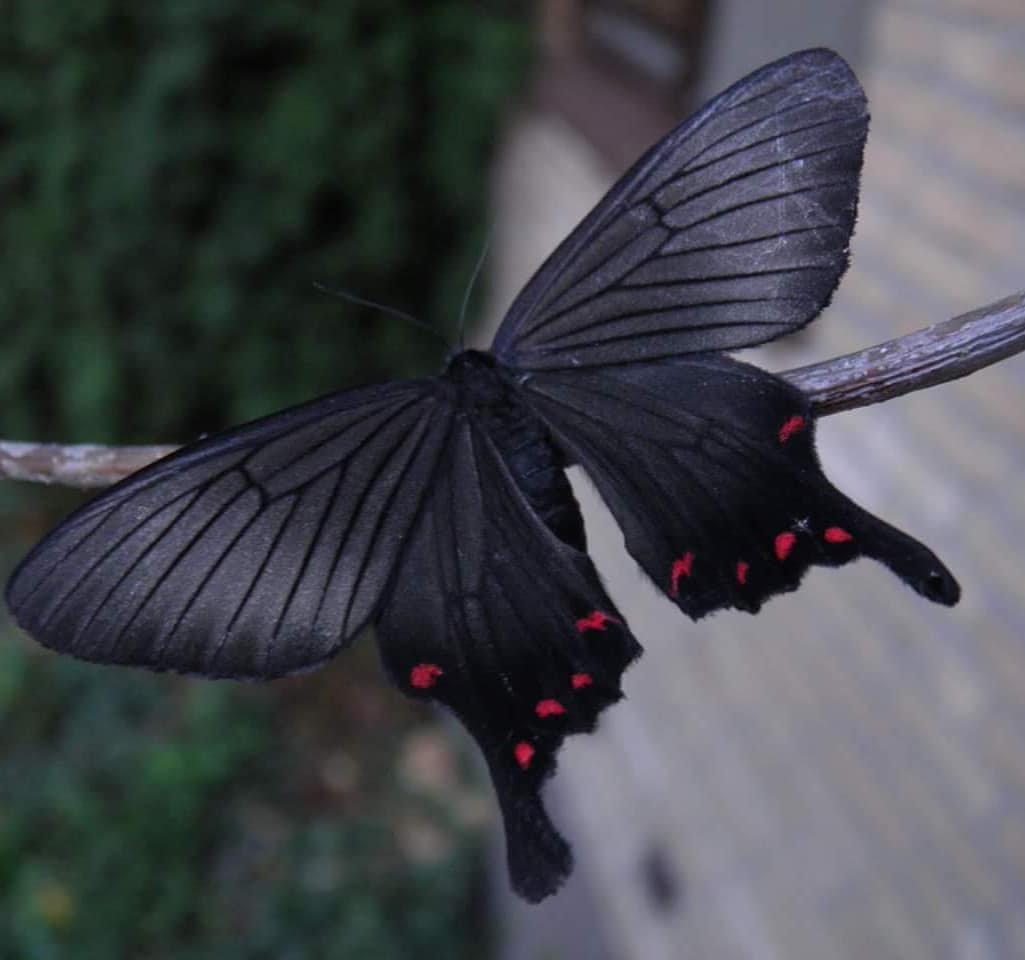 Нидерландский заводчик бабочек и мотыльков показывает всю красоту и ра