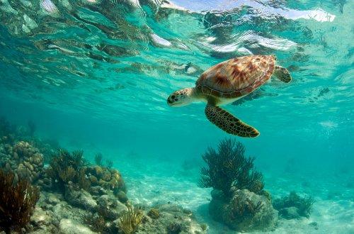 Фотопутешествие по полуострову Юкатан (21 фото)