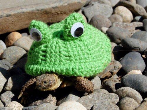 Даже черепашкам должно быть тепло в прохладную погоду (20 фото)