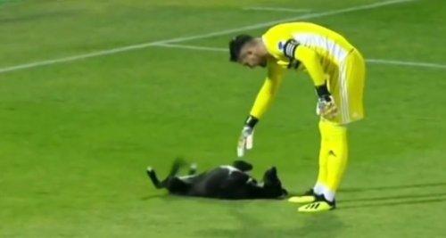Когда собака хочет играть, её ничто не может остановить! Даже футбольный матч!