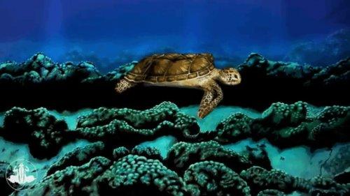 Боди-арт художник превратил модель в потрясающую морскую черепаху, которую не отличить от настоящей