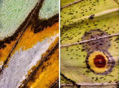 Крылья бабочек, сфотографированные с невероятно близкого расстояния (9 фото)