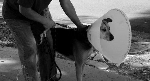 Этот парень нашёл гениальный (и забавный) способ поддержать свою собаку!