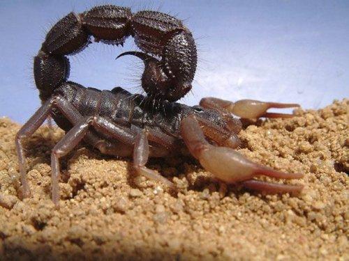 ТОП-25: Самые опасные насекомые в мире