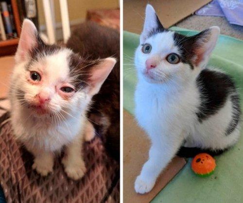 Чудесное преображение животных до и после того, как добрые люди подобрали их на улице (14 фото)