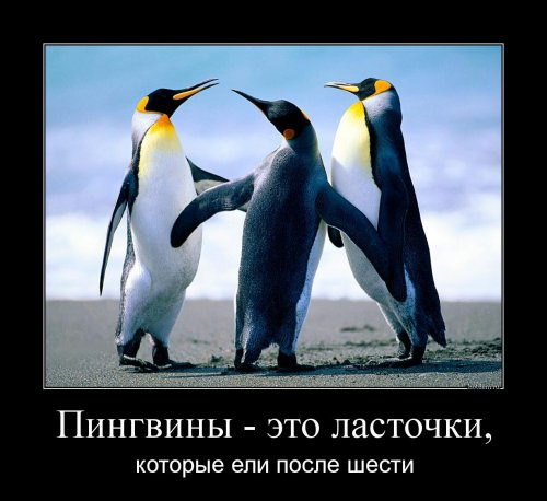 1539846488_demotivatory-4.jpg