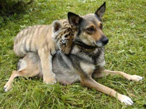 20 замечательных примеров дружбы между животными. Нам бы у них поучиться!