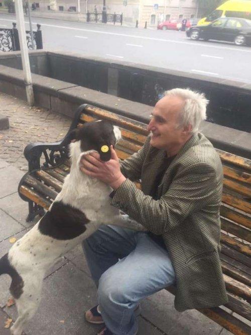 Спустя 3 года разлуки хозяин и потерявшийся пес вновь находят друг друга (4 фото + видео)
