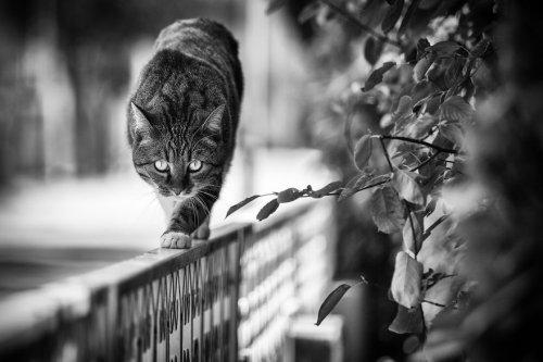 """""""Монорельсовые"""" кошки Сабрины Боем, которым удобно везде! (18 фото)"""