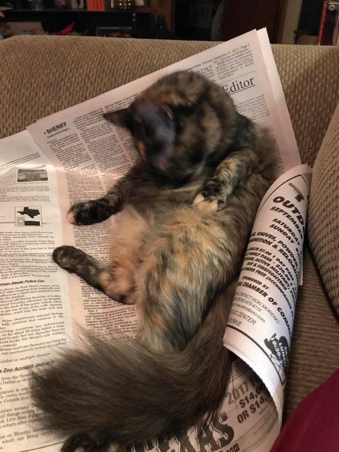 Котюни против чтения, и в своём выражении желаний они очень убедительн