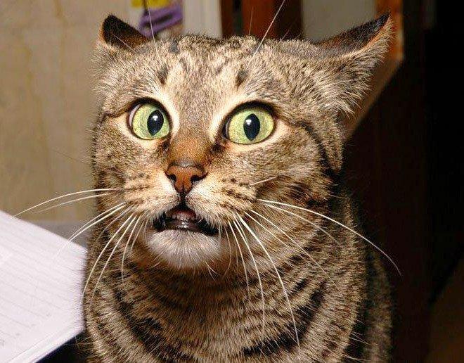 Когда кошка мяукает, а ты мяукаешь ей в ответ (20 фото)