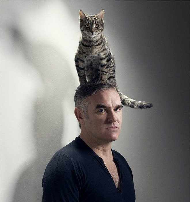 Картинки смешные с кошками и людьми, про худеющих женщин