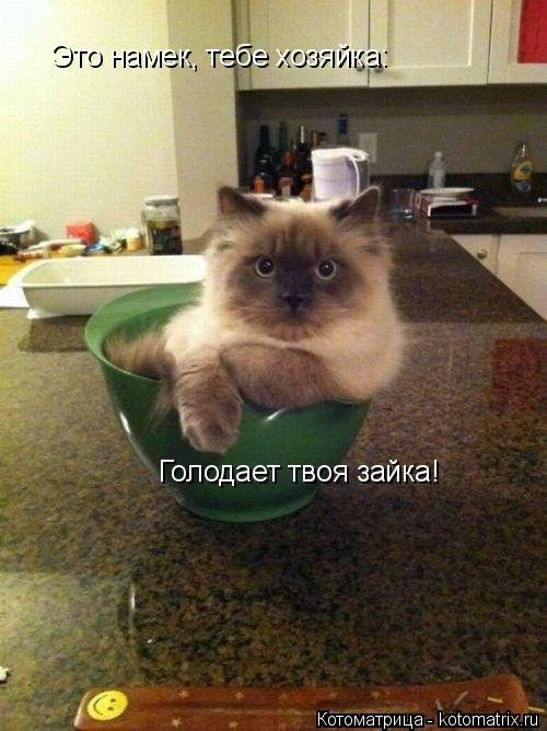 Новая котоматрица, которая вызовет улыбку (43 фото)