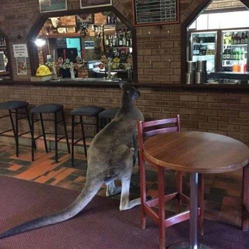 Тем временем в Австралии (17 фото)