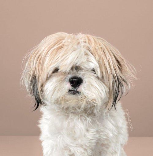 Фотограф показала преображение собак после японского груминга (20 фото)