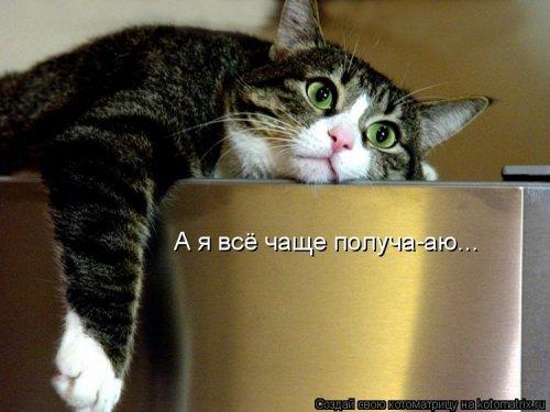 Свежая котоматрица для субботнего настроения (27 фото)