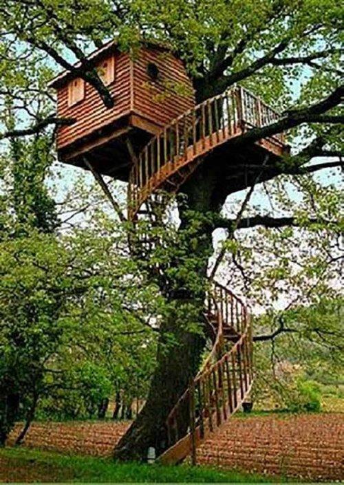 Дома на деревьях, о которых почти каждый мечтал в детстве (17 фото)