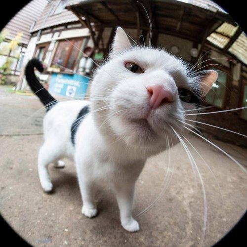 Смешные любопытные кошки, попавшие в объектив фотокамеры (19 фото)