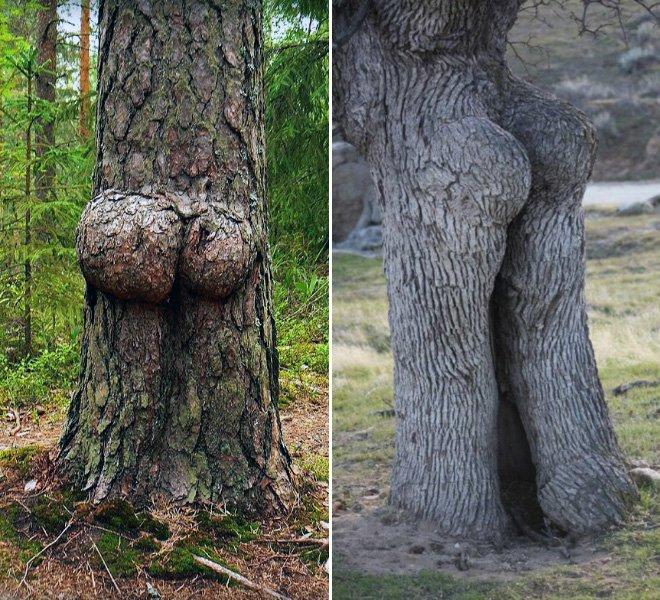 Прикольные картинки деревья, картинки