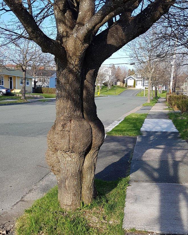 Картинки деревьев прикольные