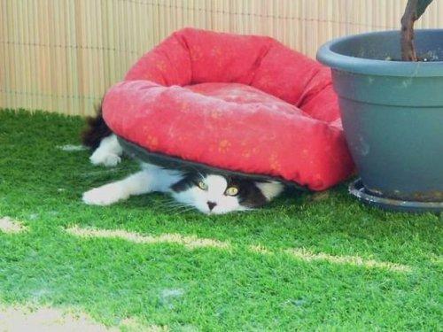 Кошачья логика, которую человеку никогда не понять (22 фото)