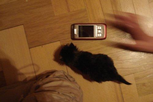 Спасённая новорождённой кошечка Фима, которая до сих пор благодарна за это людям (18 фото)