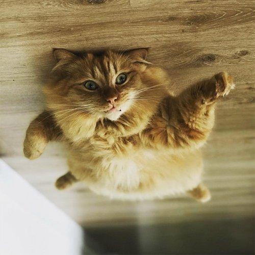Если б кошки могли парить под потолком, как воздушные шарики (19 фото)