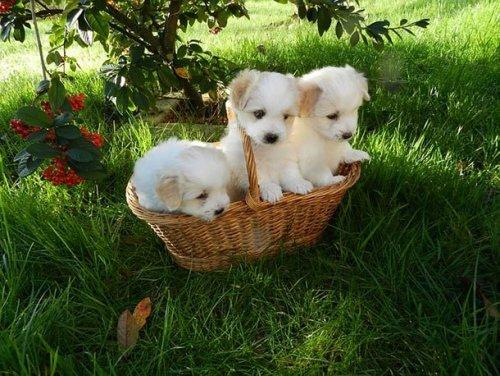 Очаровательные и прелестные щенки, которые вызовут улыбку и подарят хорошее настроение (25 фото)