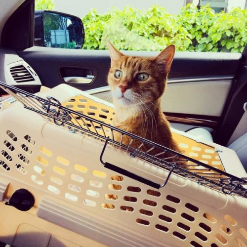 23 жалостливые, но мимишные фотографии о поездке домашних животных к ветеринару