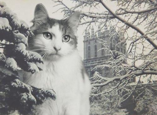 Художница создала предновогодние фотоколлажи с кошками, которые ищут новый дом и любящих хозяев (10 фото)