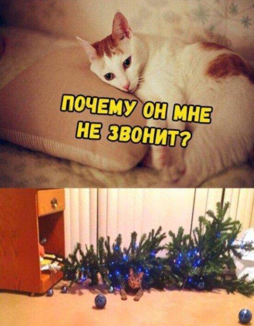 https://bugaga.ru/uploads/posts/2018-12/thumbs/1544655545_kartinka-10.jpg