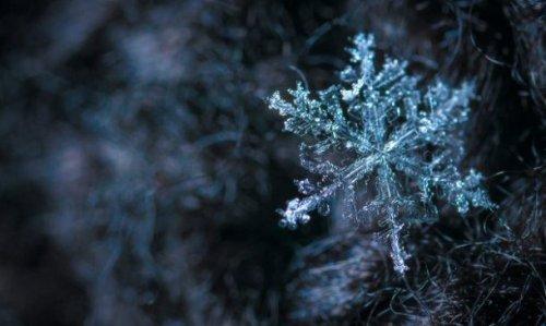 Замысловатые снежинки крупным планом, которые поражают воображение своим разнообразием (25 фото)