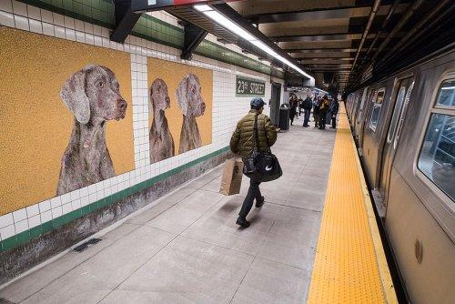 Стены на станции метро в Нью-Йорке украсили мозаиками с изображением собак (13 фото)