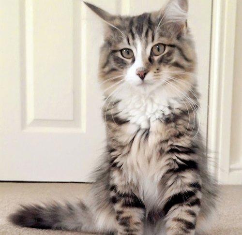 Пропавший из дома кот нашёлся через 14 месяцев... в кошачьем раю на Земле (5 фото)