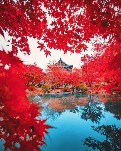 Фотограф запечатлел красочный листопад, отправившись в Киото и Нару, бывшие столицы Японии (8 фото)