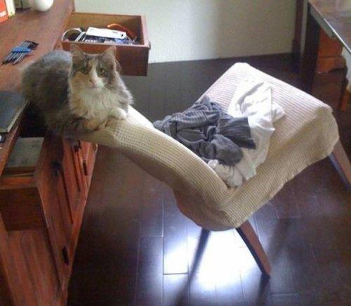 Кошачья логика, которую человеку никогда не понять (17 фото)