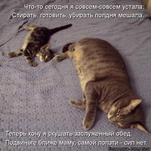 Новая котоматрица для всех (22 фото)