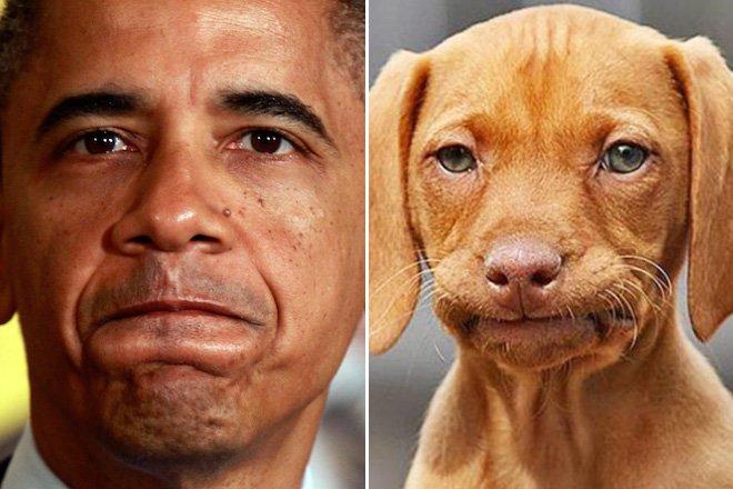 будущем сравнение людей и животных фото притормозил развилки