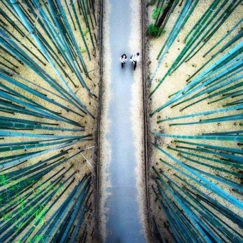 Живописные фотографии, сделанные с помощью дронов (29 фото)