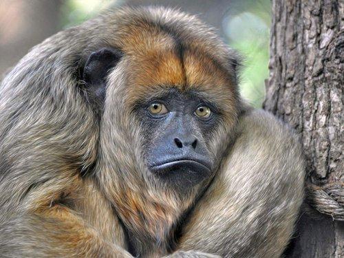 Смешные животные, об эмоциях которых можно судить по их выразительным мордашкам (20 фото)