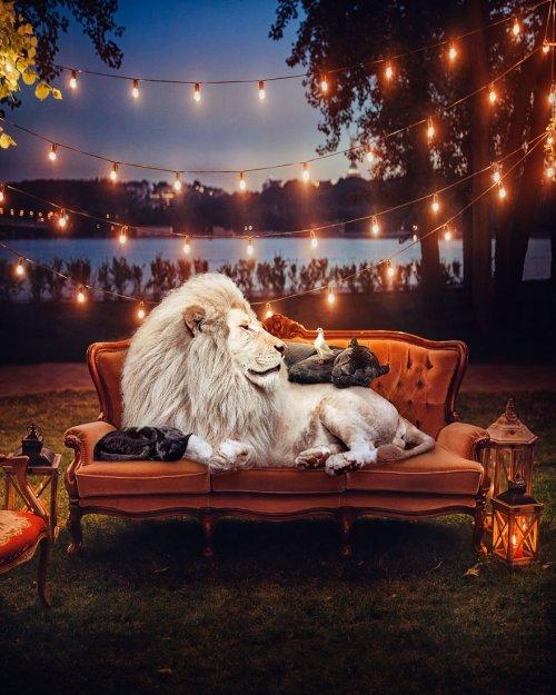 Шведский художник создаёт потрясающие работы для повышения осведомлённости об исчезающих видах животных (16 фото)