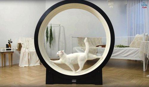Умная беговая дорожка для кошек от корейского стартапа Pet Ding (2 фото + видео)