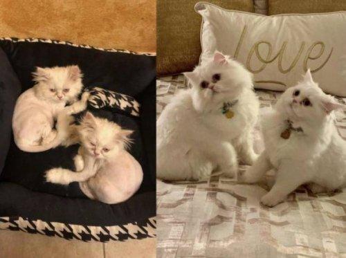 Прелестные животные до и после того, как обрели новый дом (26 фото)