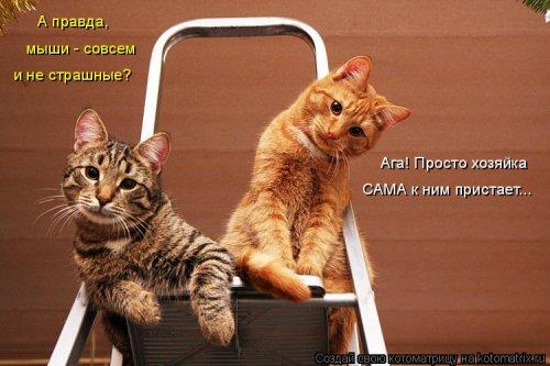 Лучшая котоматрица недели на Бугаге (25 фото)