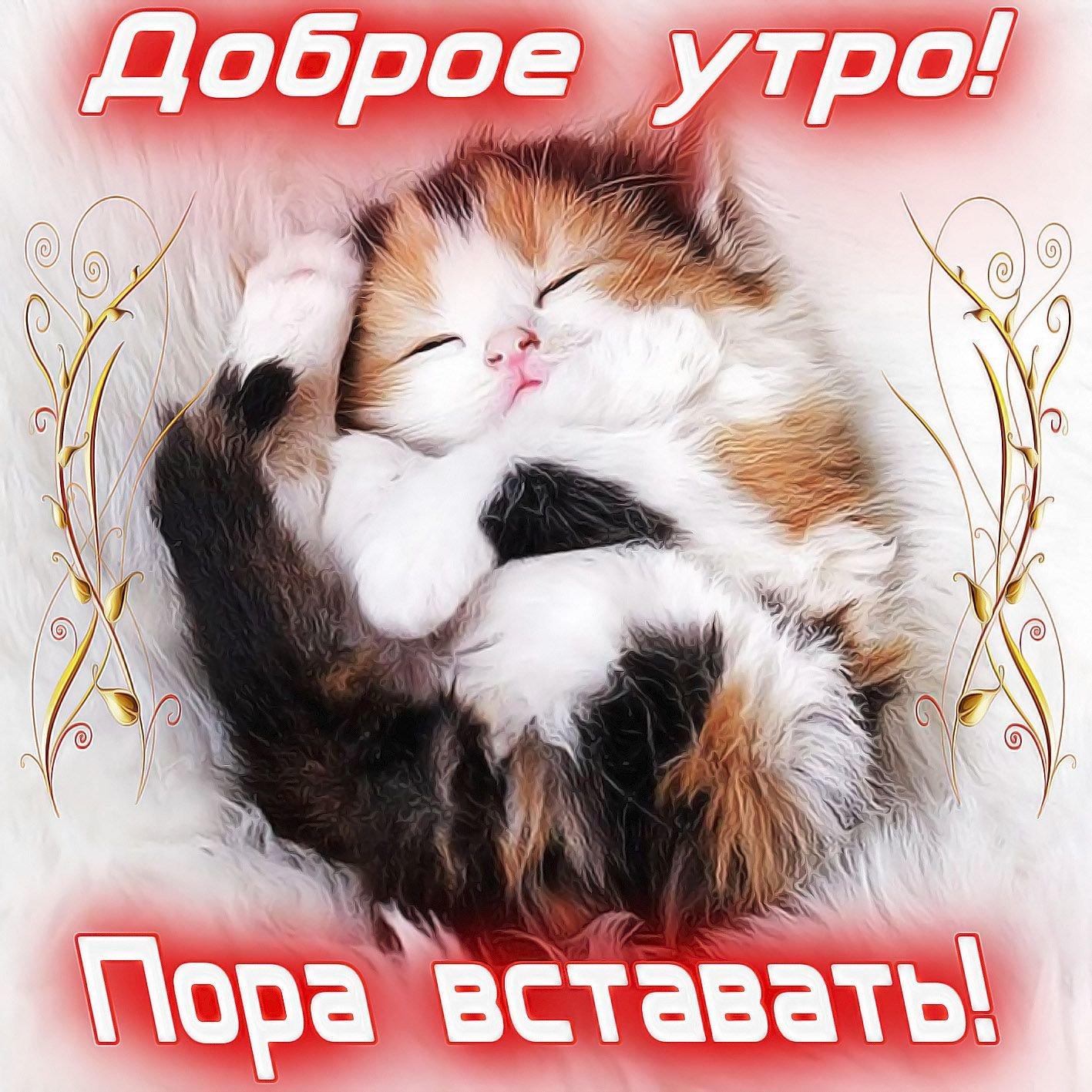 Доброе утро счастье мое картинки для мужчины с кошками, картинка аву
