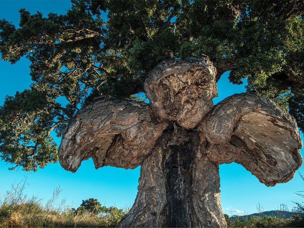 странное дерево фото только строительство продвигалось