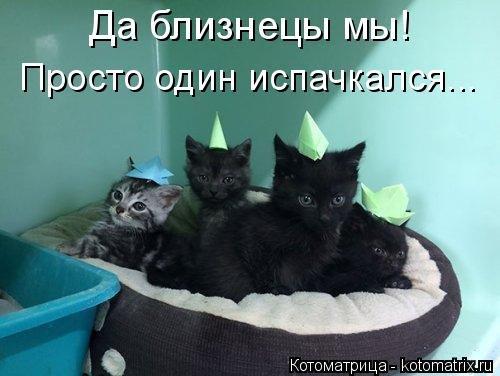 Свежая котоматрица для всех (39 фото)