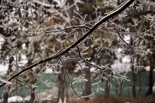 Пугающая красота природы, скованной ледяным дождём, в фотографиях Джорджианы Мазилу (20 фото)
